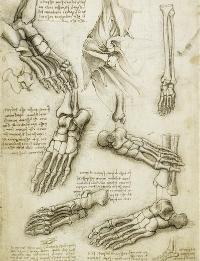 da-vinci-anatomical-study-of-feet.jpg